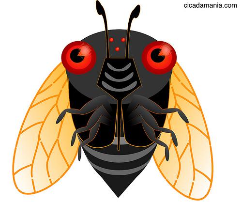 Cicada graphic courtesy cicadamania.com