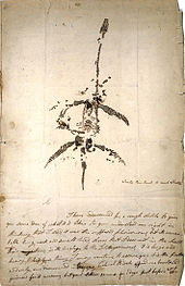 Letter and drawing from Mary Anning announcing the discovery of a fossil animal now known as Plesiosaurus dolichodeirus, 26 December 1823  image credit: wikipedia